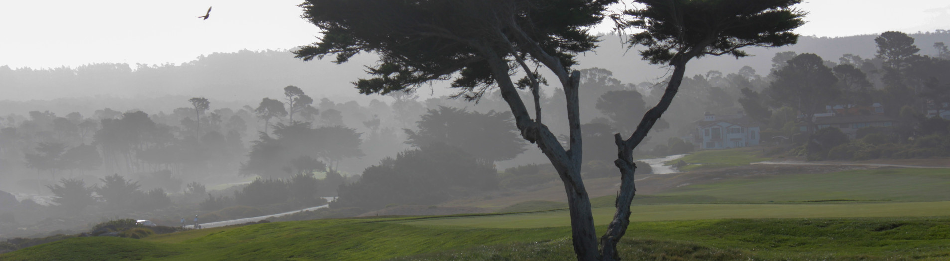 Cali: Monterey & Big Sur
